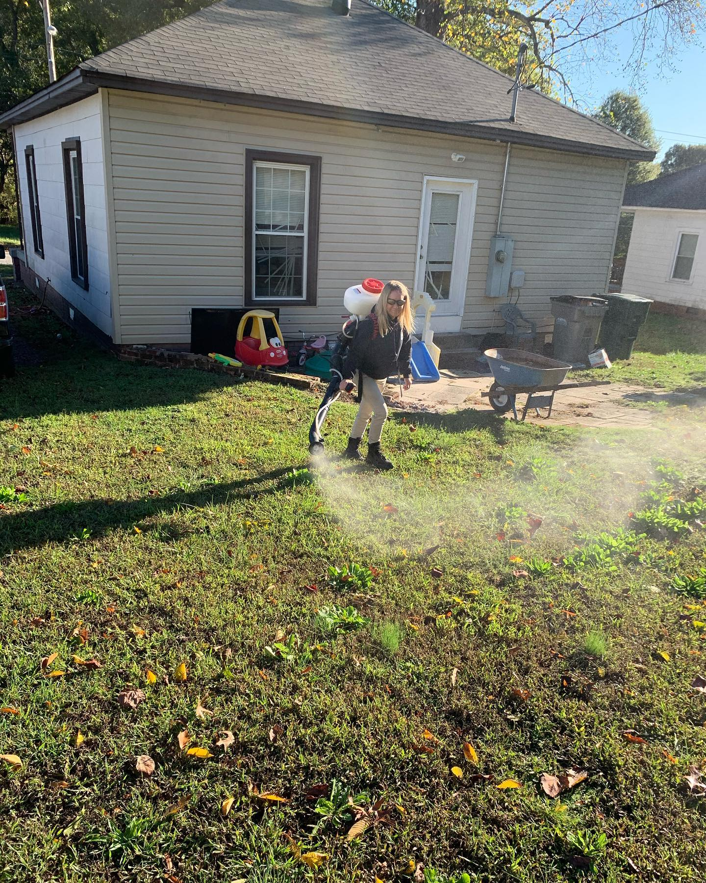 Fire Ant Removal