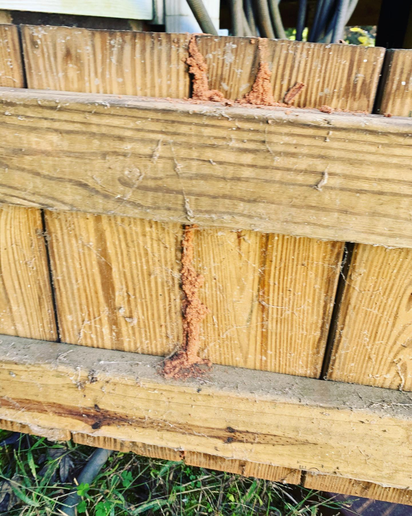 Fence Termite Removal